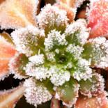 Что нужно сделать садоводу в январе – феврале?