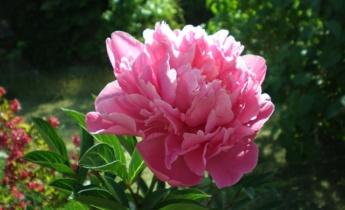 Весенний уход за цветником…