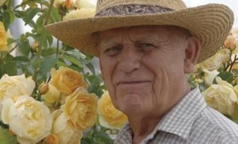 Розы Дэвида Остина – бренд высокого качества
