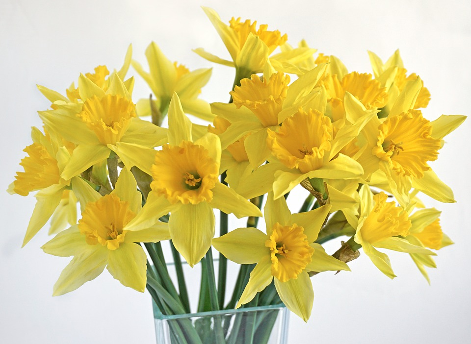 Маленький столик за углом - Том VII - Страница 27 Daffodils-1236487_960_720