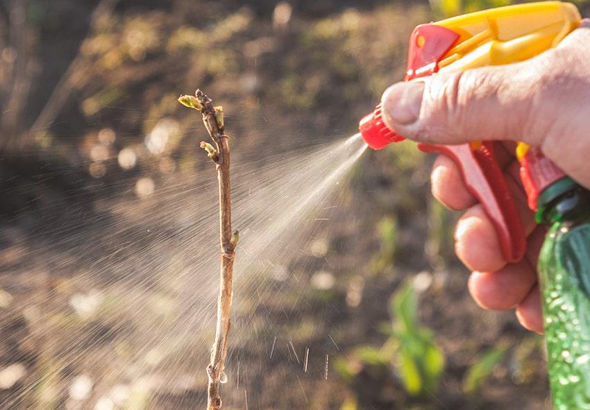 засоби захисту рослин фото опис переглянути