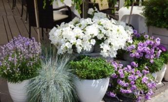 Сад своими руками: 10 полезных лайфхаков для дачников