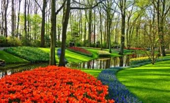 Тюльпаны из парка Кекенкоф