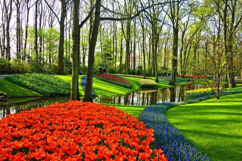 тюльпаны из парка Кекенкоф фото описание смотреть