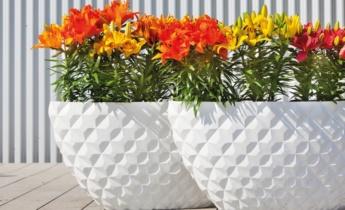 Балконные растения. Самые популярные и неприхотливые