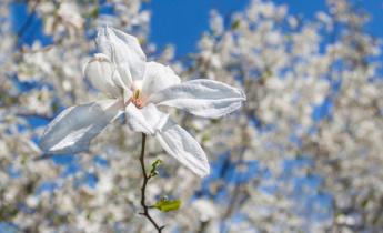 Білий сад своїми руками