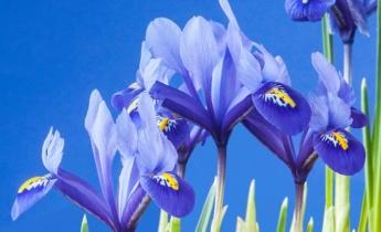 Ландшафтний дизайн: створюємо сад кольору неба