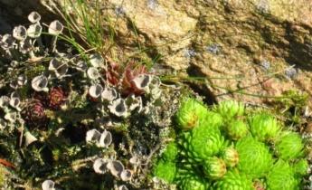 Альпінарій: гори в мініатюрі