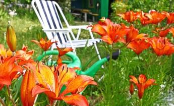 Шлях до кольорової гармонії в саду
