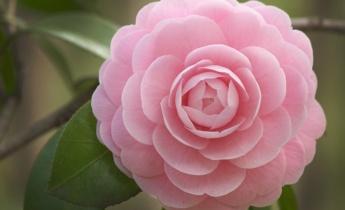 Рожевий сад для принцеси