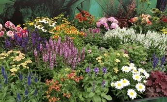 Florium на Plantarium и Dutch Dahlia Days 2019 — посетите выставки с нами!