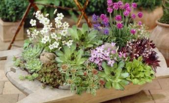 10 многолетних растений для контейнеров