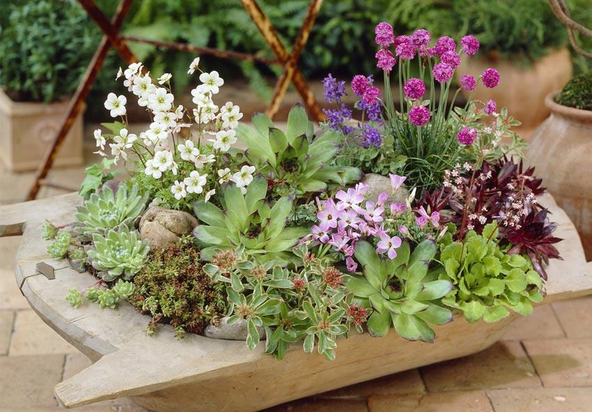 10 растений для круглогодичных контейнеров фото описание