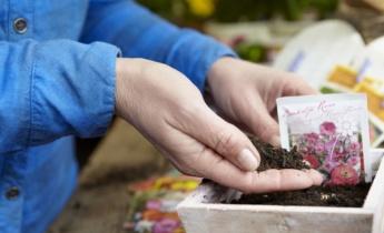 10 советов по выращиванию семян!
