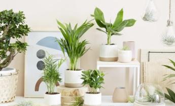 Хранение комнатных растений зимой