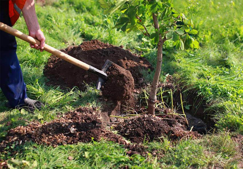 Посадка плодовых деревьев осень фото описание