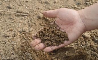 Как повысить кислотность почвы в домашних условиях