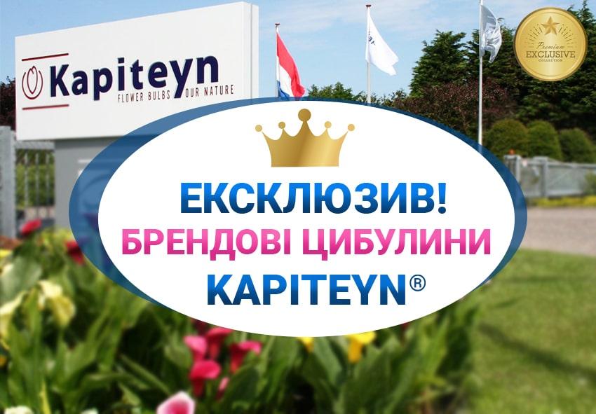 Новий партнер Флоріум - королівський бренд цибулин Kapiteyn фото опис
