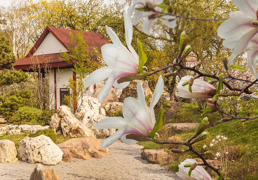 Дерева для східного саду фото опис