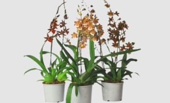 Орхидеи🌺 Top Orchids и как за ними ухаживать