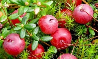 Какие плодово-ягодные культуры можно выращивать в тени