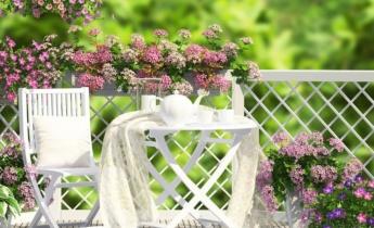 Пеларгонії на літній терасі