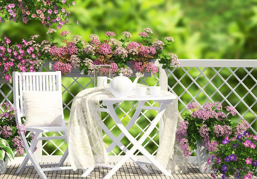 Пеларгонія на літній терасі фото опис