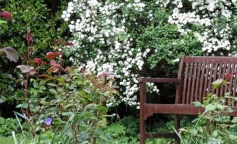 Cпірея в саду і на клумбі