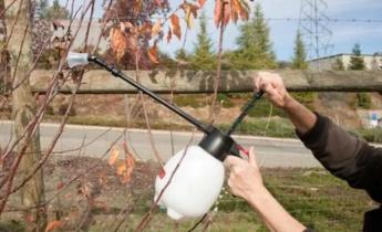 Опрыскивание сада осенью
