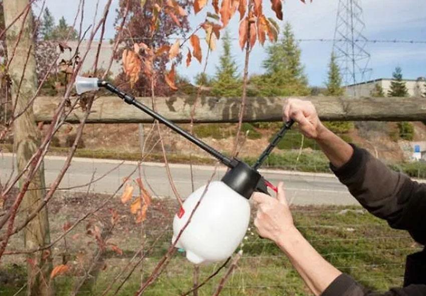 Опрыскивание сада осенью фото описание
