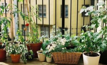 Вирощування овочів на підвіконні