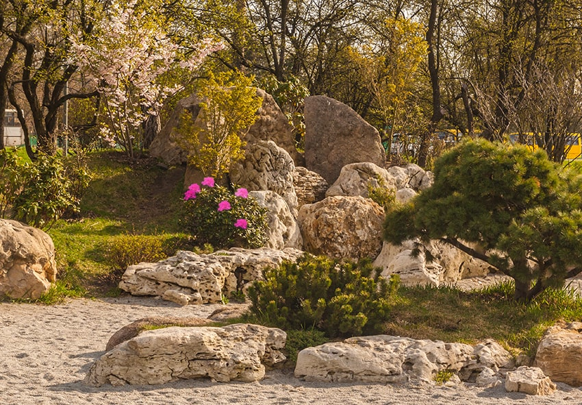 Використання рододендронів в саду фото опис