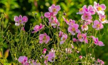 Узнайте, когда высаживать многолетние растения