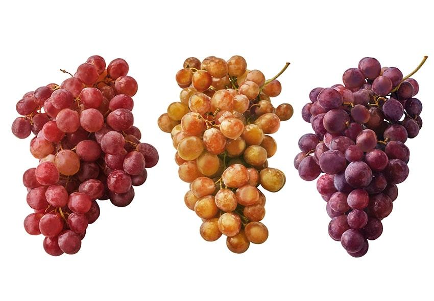 Порівняння технічних і столових сортів винограда фото опис