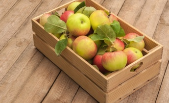 Зимові сорти яблук
