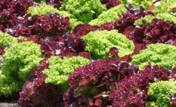 Планировка участка под посадку овощей