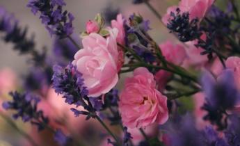 Бордюрні троянди в ландшафтному дизайні