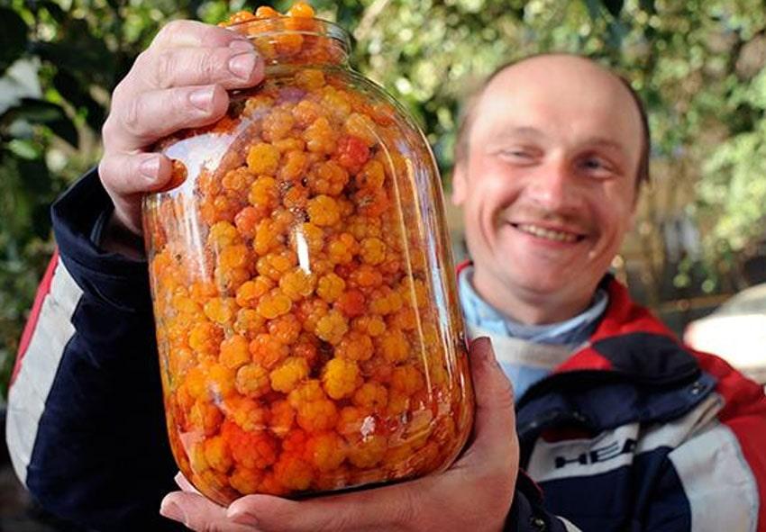 Сбор и хранение урожая морошки фото описание