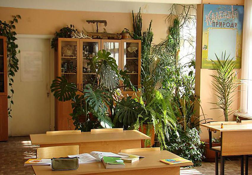 Рослини для класу фото опис