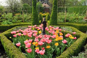 уход за тюльпанами фото описание смотреть
