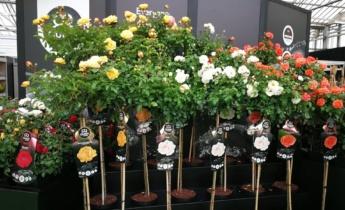 Plantarium: «Давайте сделаем мир более зеленым вместе»