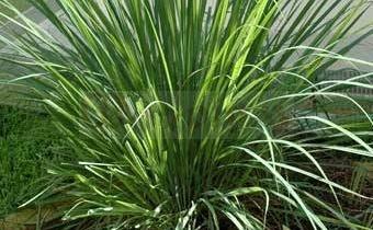 Как вырастить огородную пряную зелень?