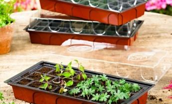 Урок 2 – как выбрать семена