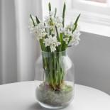Нарциссы: как создать букет из выгоночных цветов