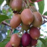 Какую почву любят плодовые деревья и кустарники?