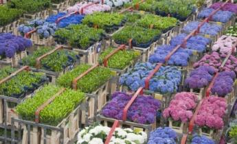 Посетите цветочный аукцион FloraHolland в Алсмере