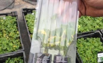 Наши растения упаковываются в фирменную упаковку