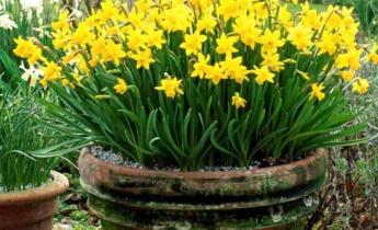 Весеннее золото: самые яркие луковичные растения для вашего сада