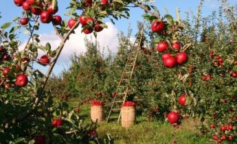 Сбор и хранение урожая: секреты и тонкости