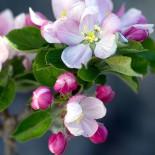 Плодовый сад в вопросах и ответах